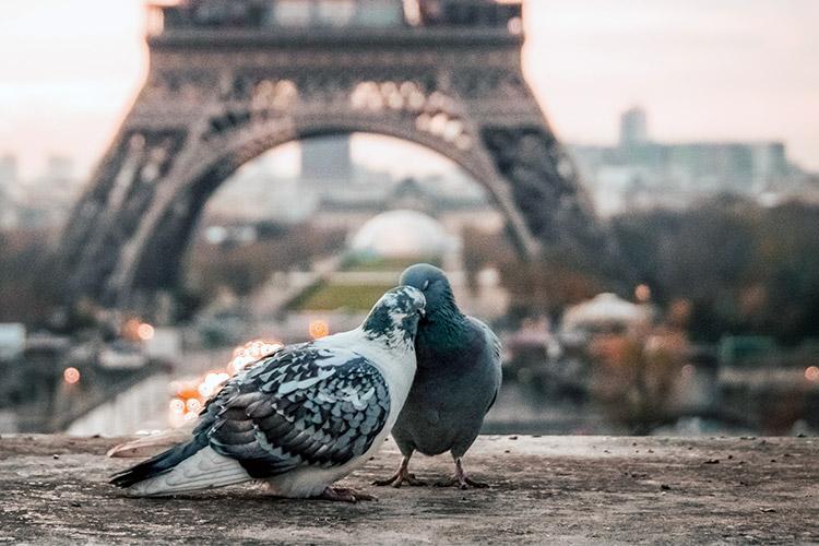 franču valodas kursi rīgā