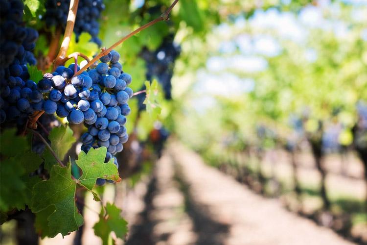 vīna degustēšana